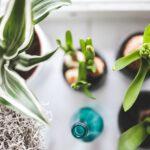 Planten in huis: de voordelen op een rijtje.