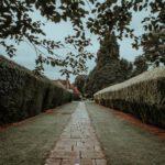 De Thuja Smaragd: een ideale haagplant
